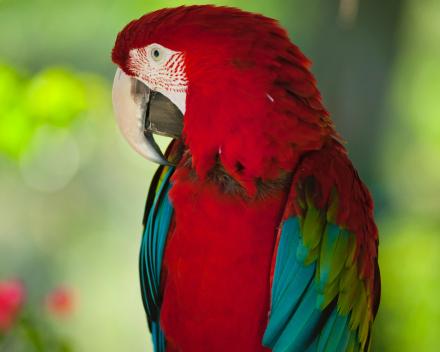 Papegaaien
