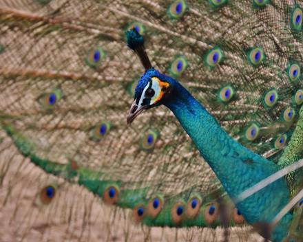 Park- en watervogels