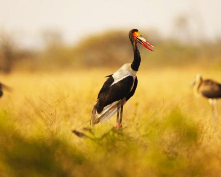 Park-/Watervogels