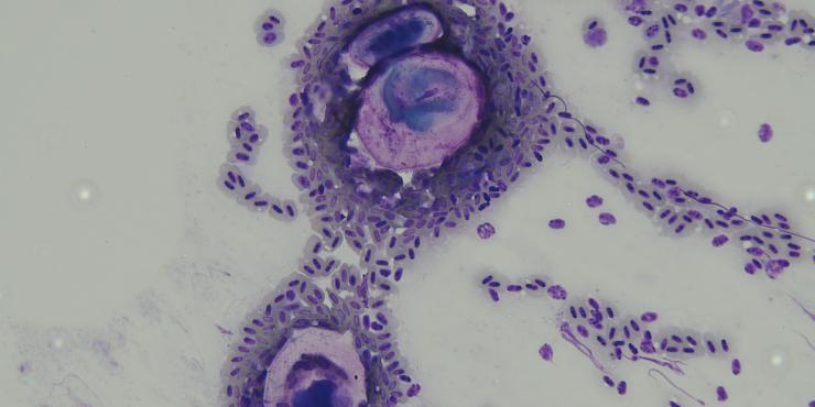 Parasitologie